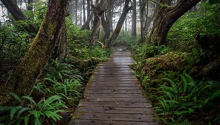 shu-Botanical Beach Trail near Port Renfrew-402521698-430x246