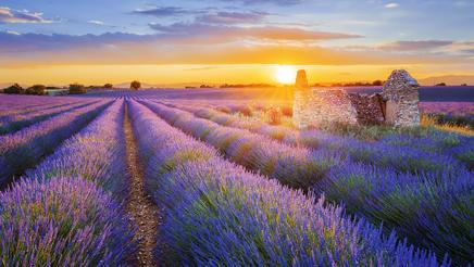 Sunset over a beautiful purple lavender field in Valensole