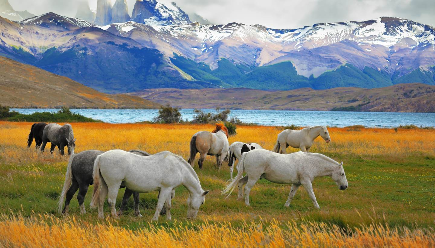 Top 5: National parks for intrepid travellers - Torres Del Paine National Park in Chile