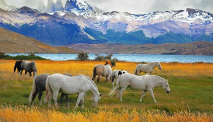Horses grazing in a meadow with the towering cliffs Torres del Paine in the background