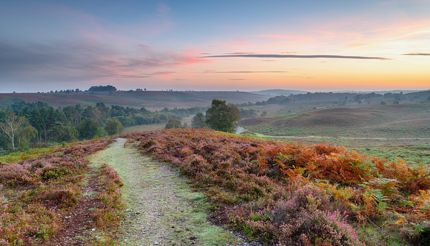 Sunrise over Rockford Common in the New Forest National Park in Hampshire, England