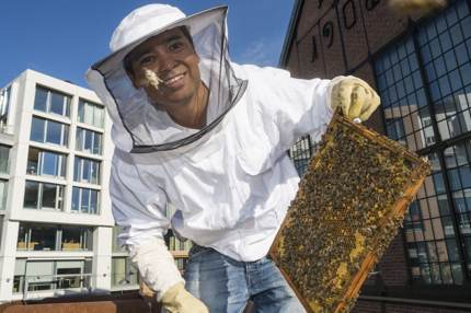 Urban beekeeping in Vulkan, a new eco-friendly neighborhood
