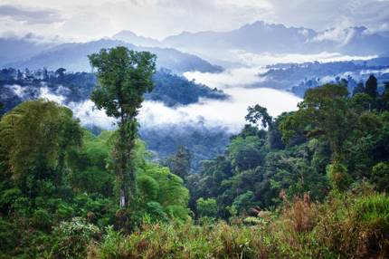 Ecuador's lush rainforest