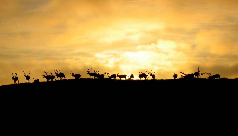 Norway - norways nomads life sami reindeer herder