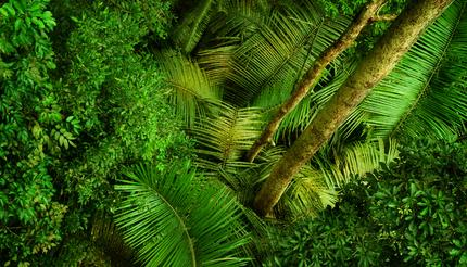 Tropical rainforest in Malaysia