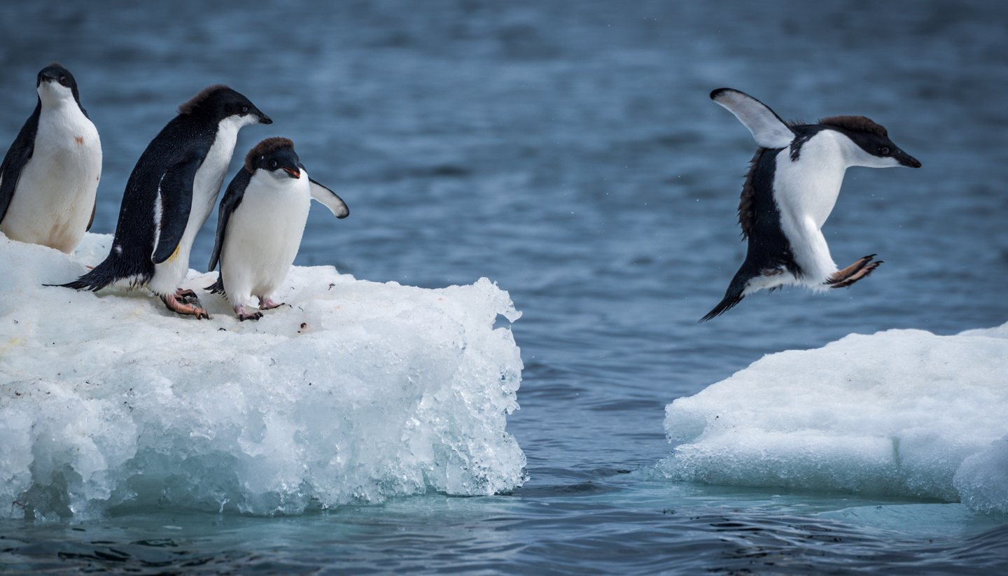 Antarctica travel guide and travel information for Can you visit antarctica