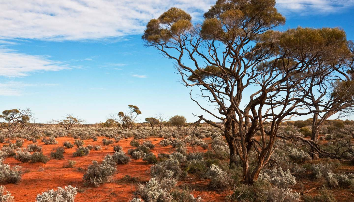 Northern Territory Travel Guide And Travel Information