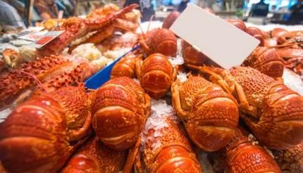 Australian Rock Lobsters.