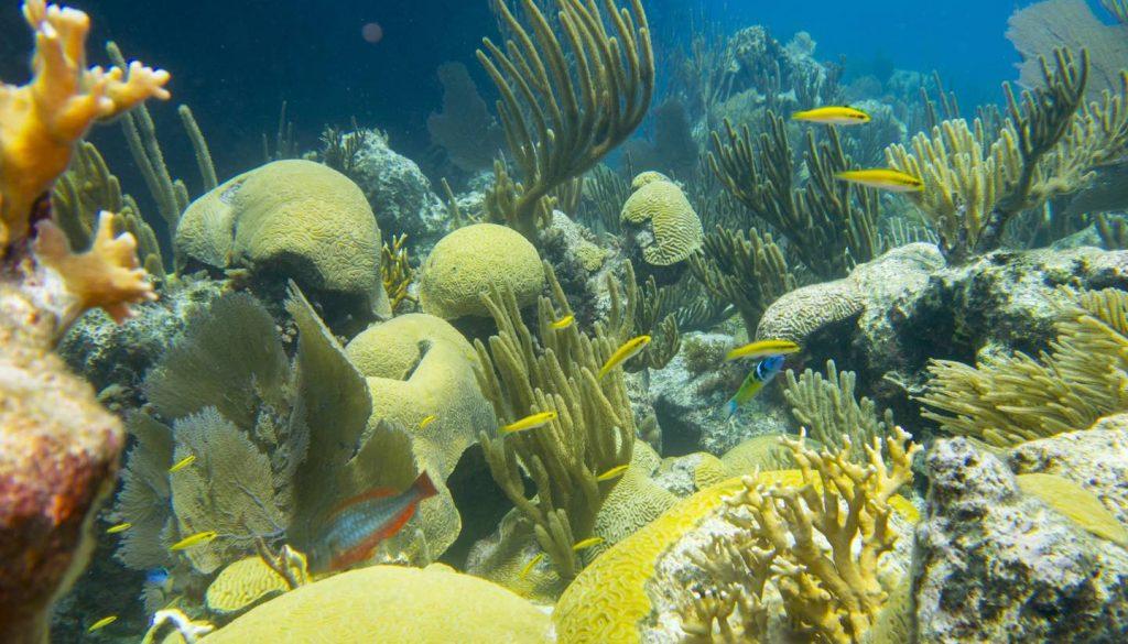 Bermuda - Coral Reef, Bermuda