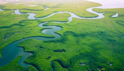 Mangroves in Gambia