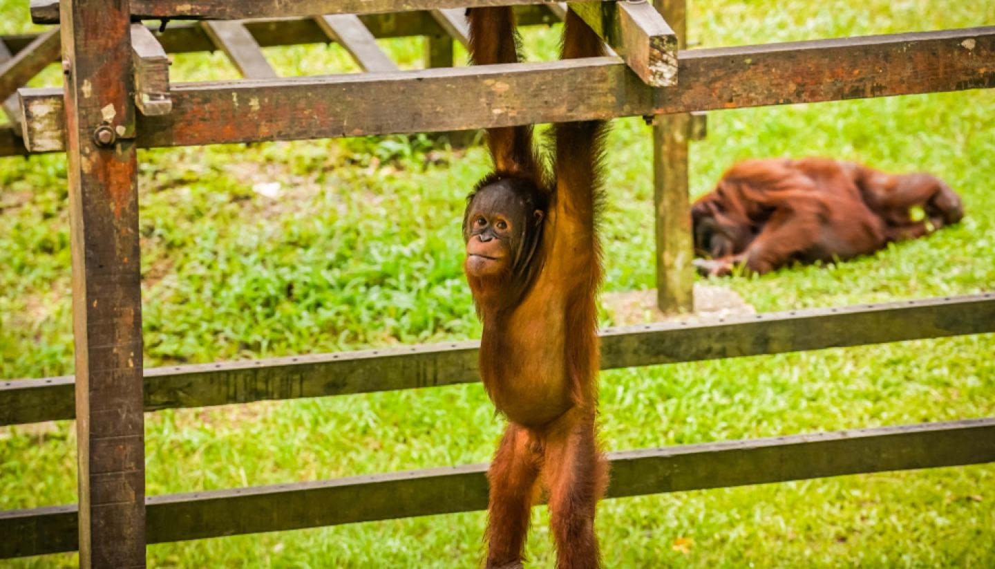 Top 5: Animal volunteer programmes - Matang Wildlife Center, Malaysia
