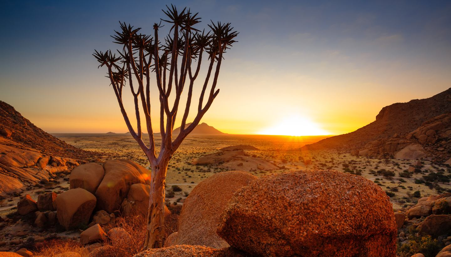 Namibia - A Quiver tree in Damaraland, Namibia