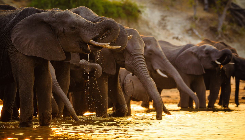 Botswana - Elephants in Chobe National Park, Botswana