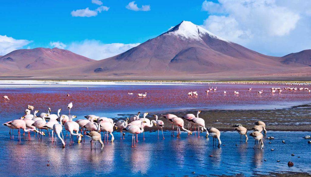 Bolivia - Laguna Colorada, Bolivia