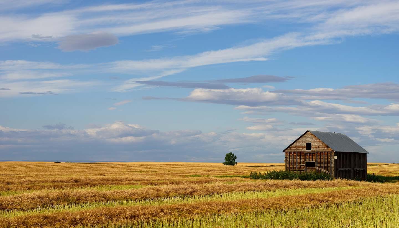 Saskatchewan - Canola Field Saskatchewan, Canada