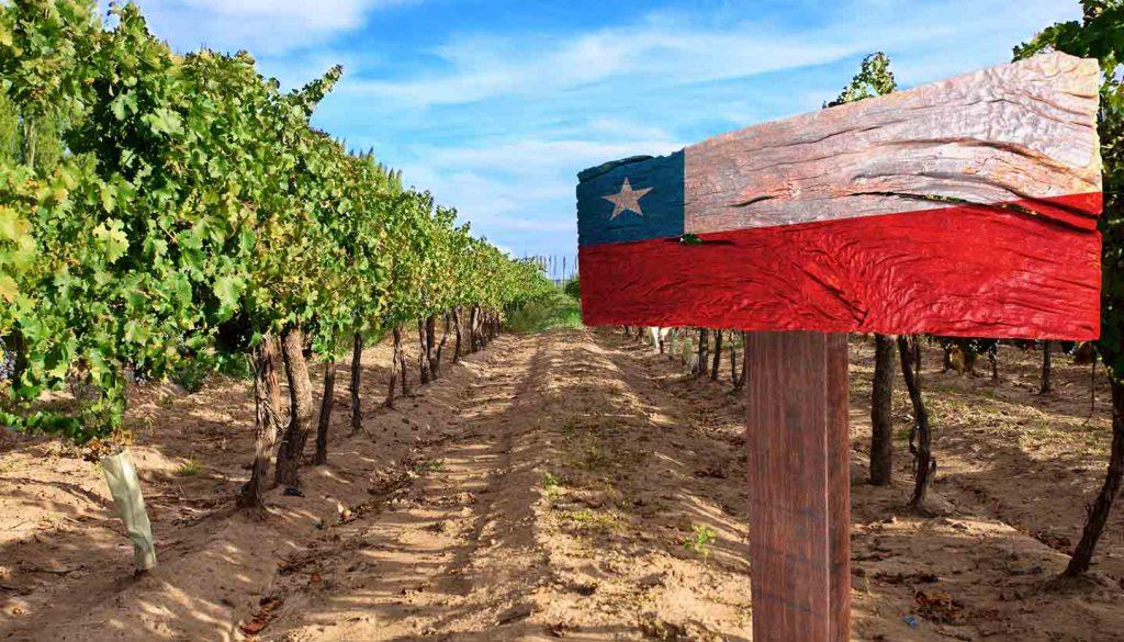 Chile - Vineyard Cabernet Sauvignon from Chile