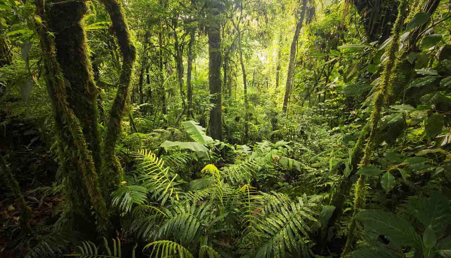 The 20 greenest destinations on Earth - Cloud forest, Costa Rica