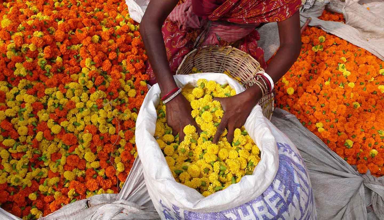 Kolkata (Calcutta) - Flower market. Kolkata. India