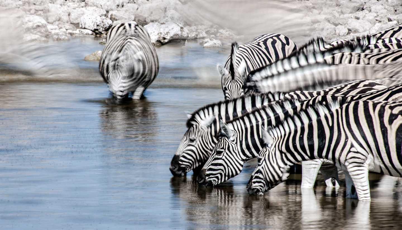 Malawi - Zebra Motion, Malawi