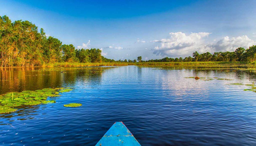 Surinam - Matapica Swamp, Surinam