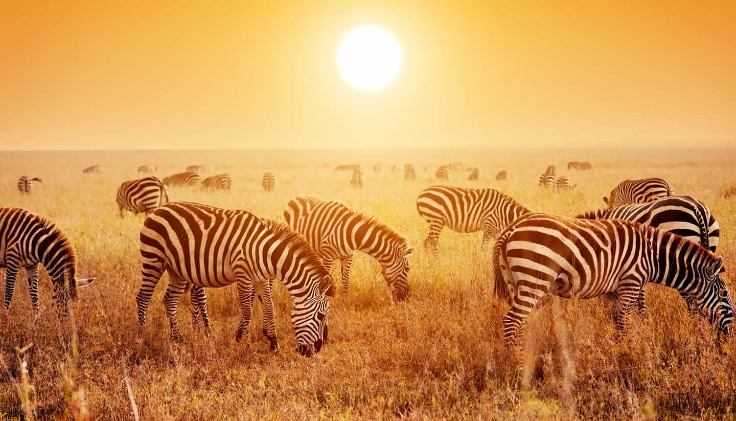 tanzania travel guide and travel information world travel guide