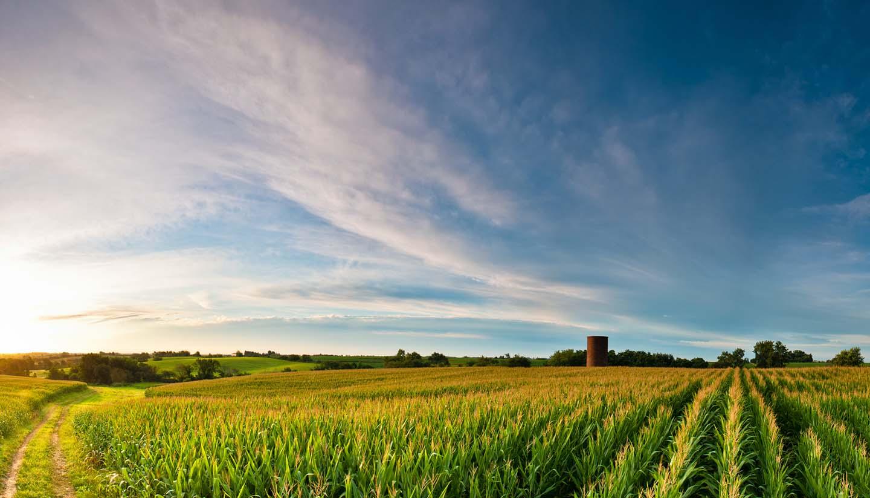 Iowa - Corn Fields Iowa, USA