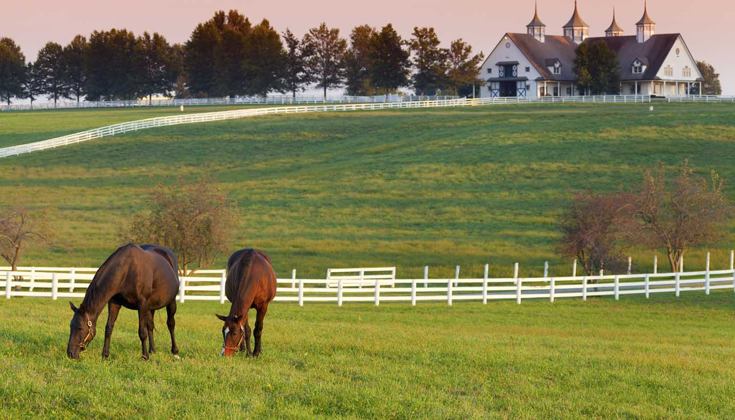 Kentucky - Horse Farm in Kentucky, USA.