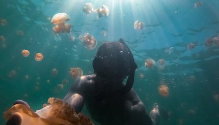 Swim with stingless jellyfish in Kakaban, Indonesia