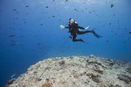 A diver uses a reef hook to steady themselves, Blue Corner, Palau