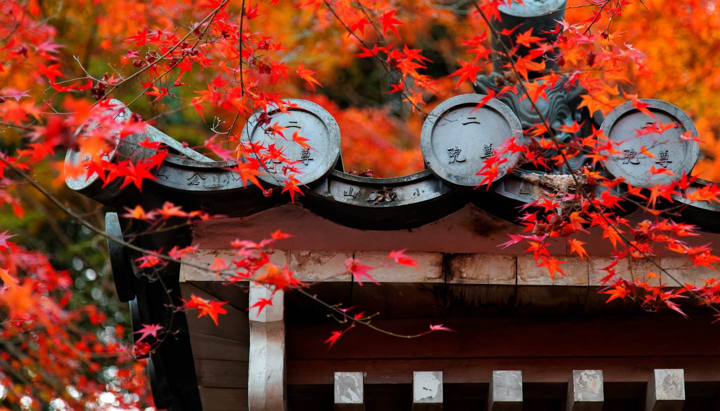 Top 5 places to see autumn foliage in Asia - Nison-in Temple in Arashiyama, Kyoto, Japan