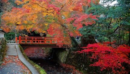 Kyoto - Sanzen-in Garden in Ohara