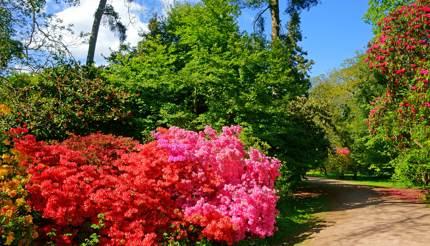 Westonbirt Arboretum, Gloucestershire