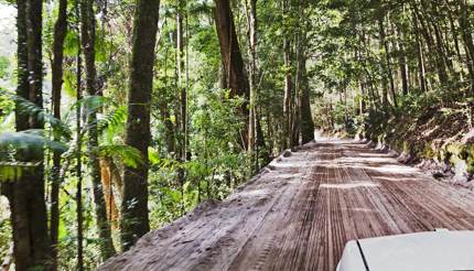 Fraser Island rainforest
