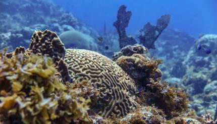 Scuba diving scenery