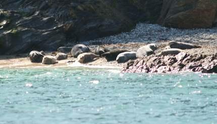 Oth-UK-England-Falmouth-Seal-SunBathing-0030-430x246