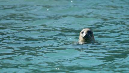 A seal checking us out in Falmouth