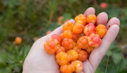 Cloudberries in hand