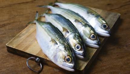 Fresh mackerel for dinner