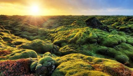 Mossy landscape at Eldhraun, Iceland