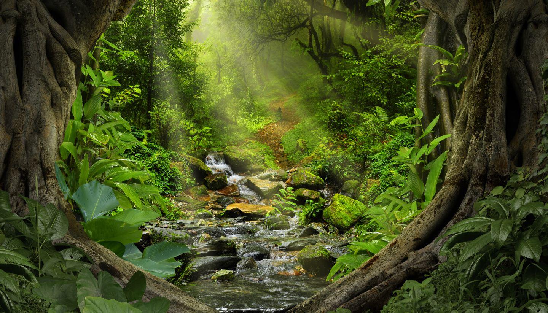 Home - Tropical jungle