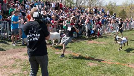 Goat race - huge crowding of people are watching behind a barrier