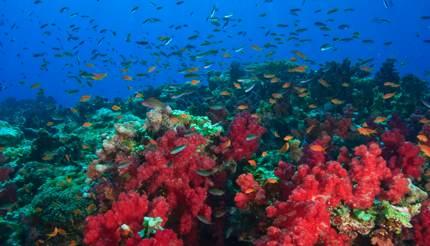 Rainbow Reef near Taveuni