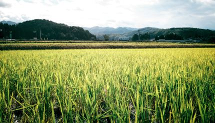 Enjoy the sprawling natural beauty on the Toyama Countryside Cycling Route