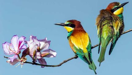 Birds from Eilat Ornithological Park