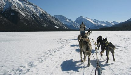 Dog sledding in the Canadian Rockies