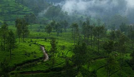 Tea plantations in Nuwara Eliya