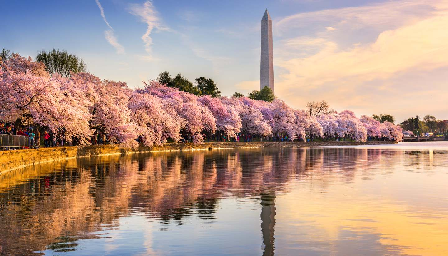 Washington, DC - Cherry blossom in Washington DC