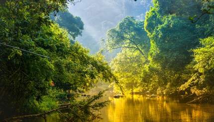 Amazing scenic view - tropical forest with jungle river surrounded by green trees in the morning rays of the sun