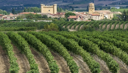shu-haro-spain-vineyards-315065111-430x246