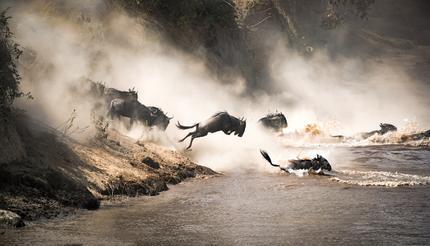shu-Kenya-Masai-Mara-Mara-River-1007823028-430x246